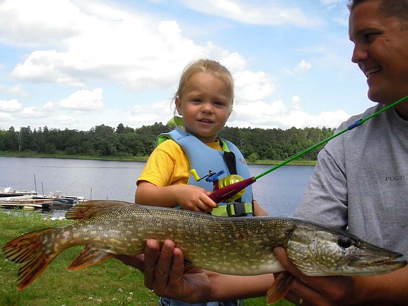 Great minnesota walleye fishing northern fishing muskie for Minnesota non resident fishing license
